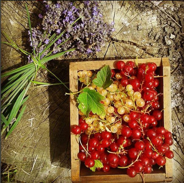 lavender redcurrant