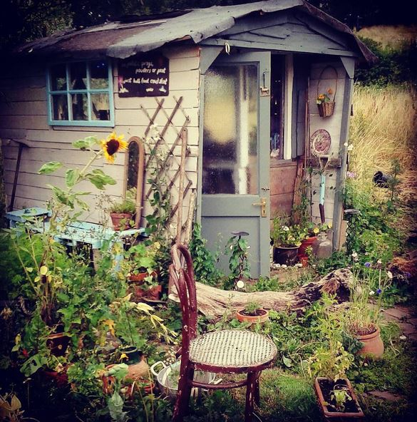 shed summer