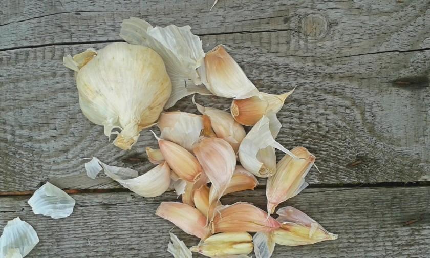 solent white garlic